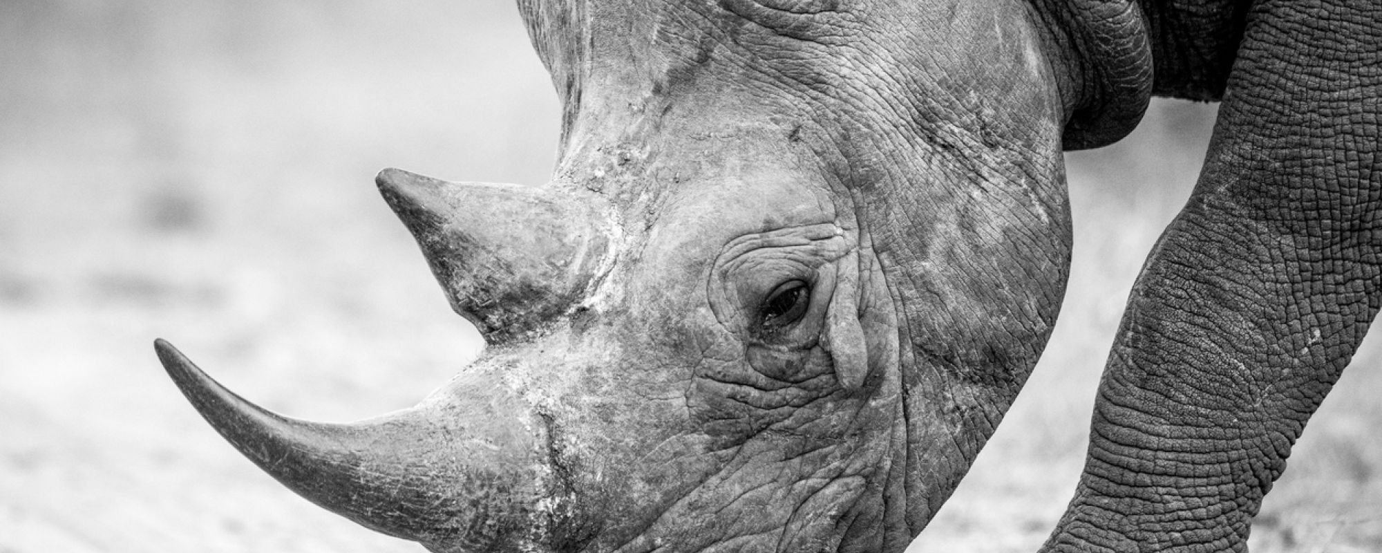 Searching the elusive Black Rhino