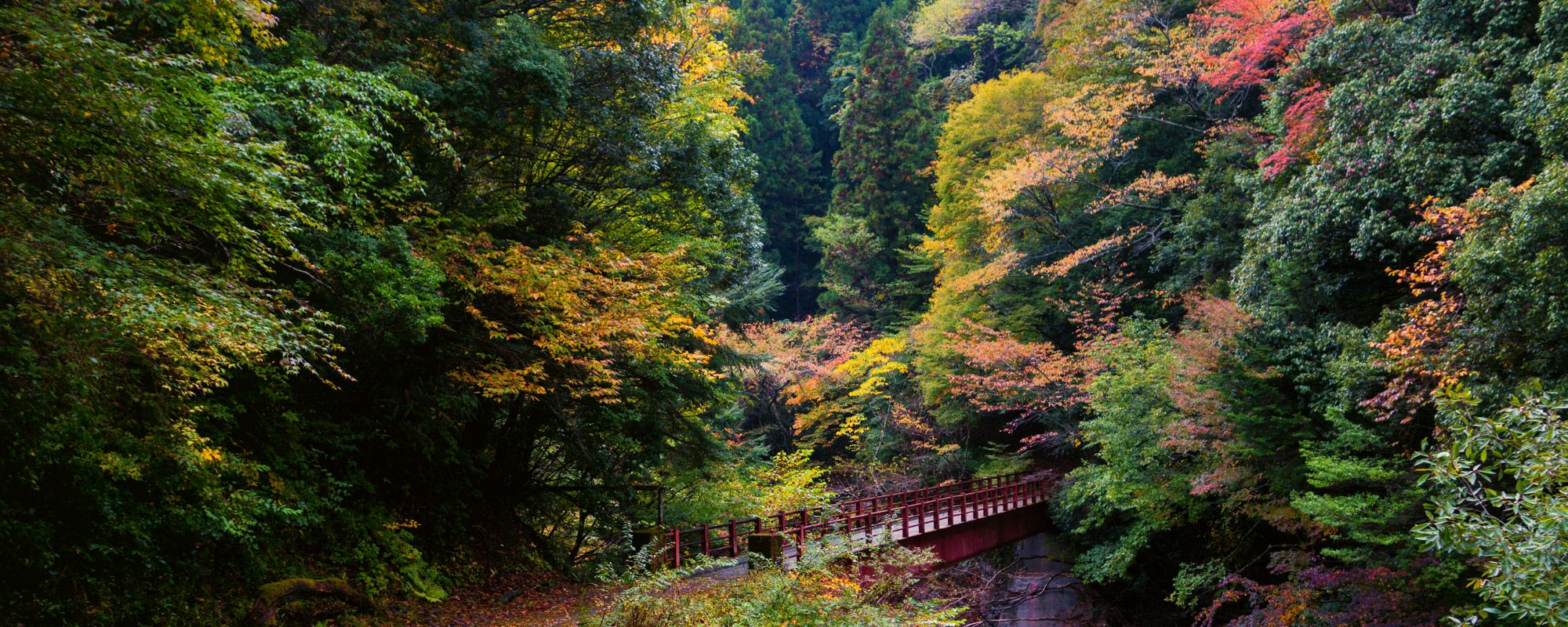 Sacred trails of the Kumano Kodo