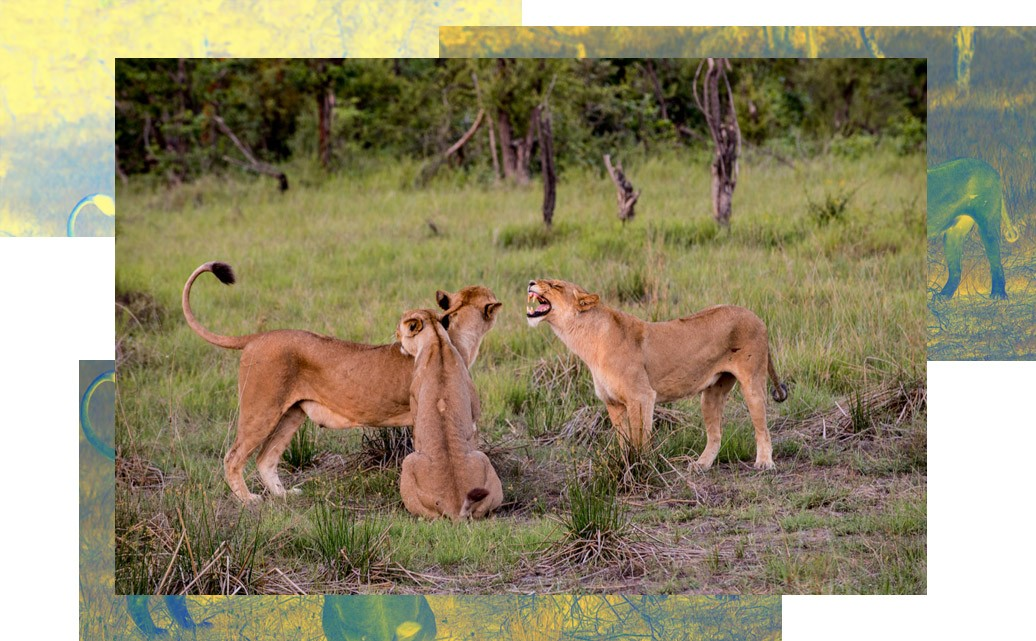 Safaris that tell stories