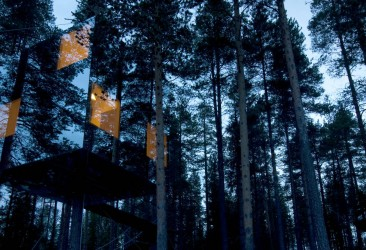 Lapland in an Arboreal Abode